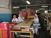 Разнорабочие на кондитерскую фабрику
