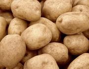 Картофель от 20 тонн.