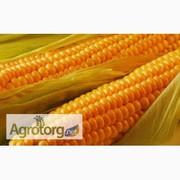 Покупаем кукурузу!!! Выгрузка на ТИС Минудобрения (г.Южный)
