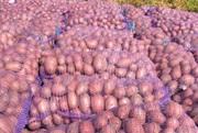 Картофель оптом цена от производителя