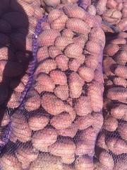 Продаем картофель молодой