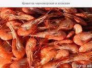 Продам Черноморские Креветки оптом